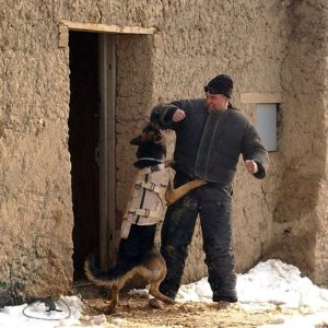 482px-Working_dog_in_Afghanistan,_wearing_a_bulletproof_vest,_being_trained-hires